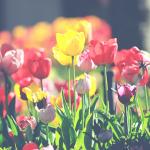 Jar je tu. Postarajte sa ozáhradu